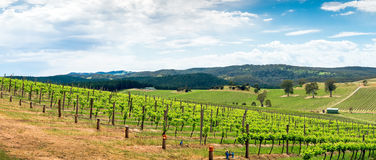 Wine valley in Barossa Royalty Free Stock Image