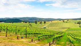 Wine valley in Barossa. Picturesque wine valley in Barossa, South Australia. Color-toning effect appplied Royalty Free Stock Photo