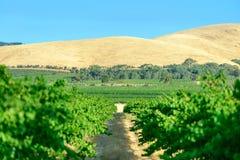 Wine valley Royalty Free Stock Photos