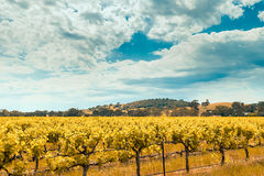 Wine valley in Barossa, South Australia Royalty Free Stock Photography