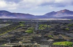 The Wine Valley of La Geria, Lanzarote, Canary Islands Royalty Free Stock Photos