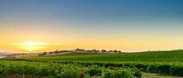 Wine valley at sunset. Barossa Region, South Australia Royalty Free Stock Image