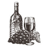 Wine vector logo design template. grape or alcohol Stock Images
