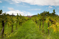 Wine village Royalty Free Stock Images