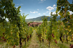 Wine village of Alsace Stock Images