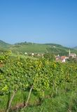 Wine Village of Birkweiler,german Wine Route,Germany Stock Photography