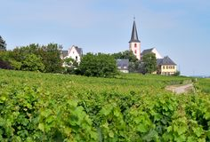 Wine Village. Hochheim am Main at the end of summer,many vignie are almost ripe for harvest Stock Image
