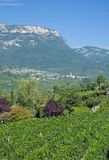 Wine Village of Kaltern,south Tyrolean Wine Route,Italy Royalty Free Stock Photos