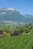 Wine Village of Kaltern, south Tyrolean Wine Route, Italy. The famous Wine Village of Kaltern near merano and Bolzano, South Tyrolean Wine Route, Trentino, Alto royalty free stock photos