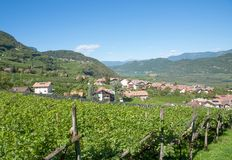 Wine Village of Tramin,south Tyrolean Wine Route,Italy Royalty Free Stock Photos