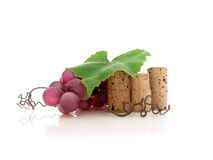 Wine Vine Royalty Free Stock Photo