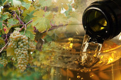 Wine and vines backdrop. Bottle pouring wine into glass with ripe grapes on vines viticultural background Stock Photos