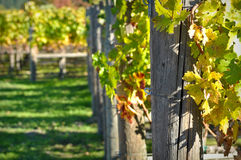 Wine Vineyard Royalty Free Stock Images