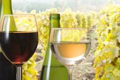 Wine with vineyard Stock Photography