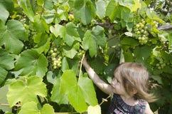 Wine - Vineyard Stock Photo