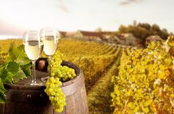 Wine with vineyard on background Stock Photography