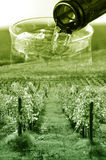 Wine and vineyard concept Stock Photo
