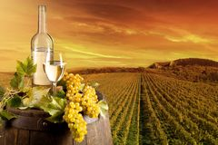 Wine in vineyard Royalty Free Stock Photography