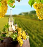 Wine in vineyard Stock Image