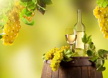 Wine in vineyard Royalty Free Stock Images