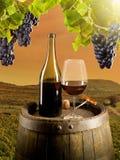 Wine in vineyard. Detail of wine with keg on vineyard Stock Photo