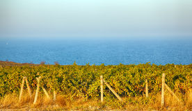 A wine vineyard in France. Royalty Free Stock Images