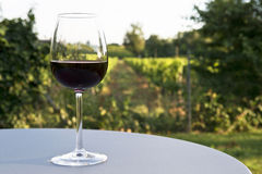 Wine and vineyard. Glass of red wine on a table in front of a vineyard stock photography