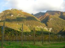 Wine vineyard  panorama Royalty Free Stock Photo