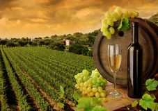 Wine and vineyard in sunset. White wine on background of evening vineyard