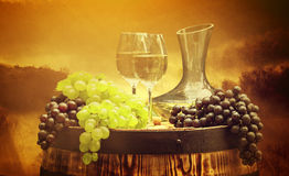 Wine and vineyard in sunset Royalty Free Stock Photos