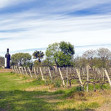 The wine walk, Uruguay Royalty Free Stock Image