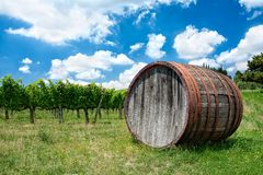 Wine, wine barrel in Tuscany Stock Photography