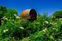 Wine wooden barrel Royalty Free Stock Images