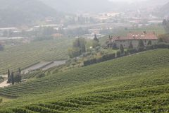 Wine yard Stock Photo