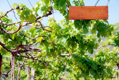 Wine yard Royalty Free Stock Images