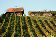Wine Yard. A wine yard in the south of Styria in autumn Stock Photos