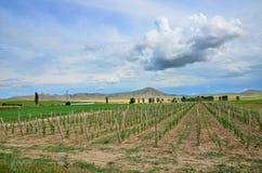 Wine yard Stock Photography