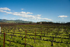 Wine yard in the mountain Royalty Free Stock Image