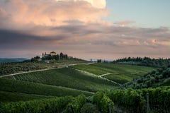 Wine yard overview Italy Tuscany stock photography