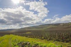 Wine yards, burgundy, France, saone-et-loire Royalty Free Stock Image