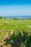Wine yard's in burgundy, France, summer Royalty Free Stock Photography