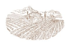 Wine yard sketch. Hand drawn in old sketch and vintage style for the label, wine label. Fields background and trees. The rural landscape of vineyard with Stock Images