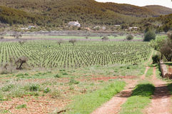 Wine yard in spain Royalty Free Stock Photo