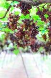 Wine yard Royalty Free Stock Photo