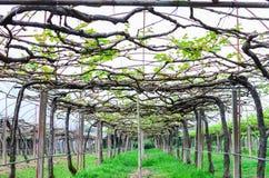 Wine yard Stock Image