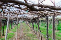 Wine yard Royalty Free Stock Image