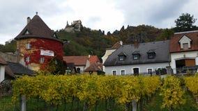 Wine yard in wachau austria Royalty Free Stock Photos