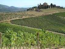 Wine-yards of Tuscany Royalty Free Stock Photography