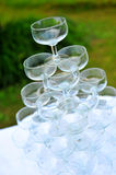 Winecup Stock Photography
