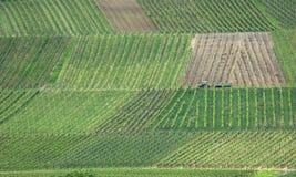 winegård Arkivbilder